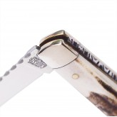 Lambfoot pattern stag pocket knife with worked backspring